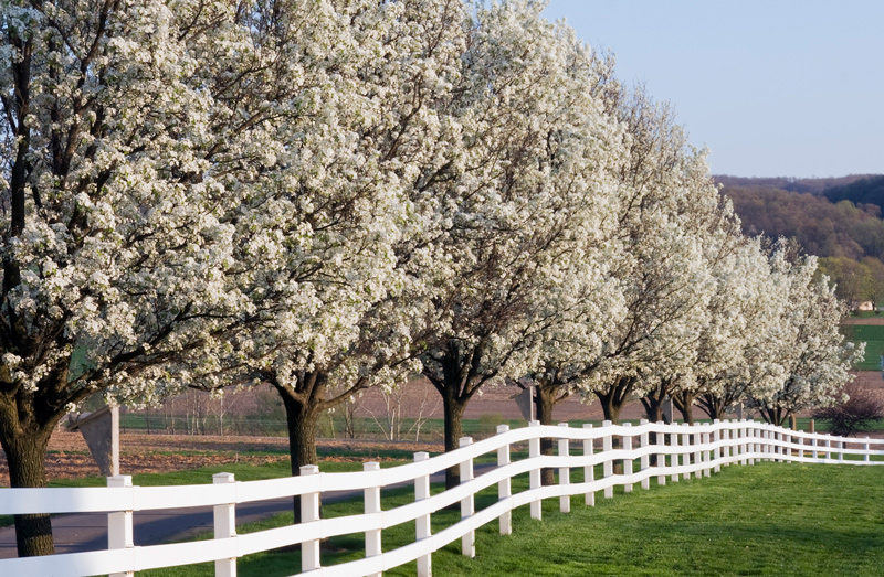 Best Trees for Small Spaces in New Jersey