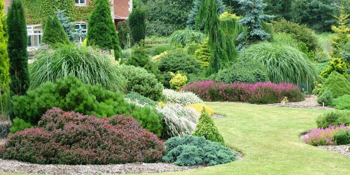 The Benefits of Evergreens for a Beautiful Landscape