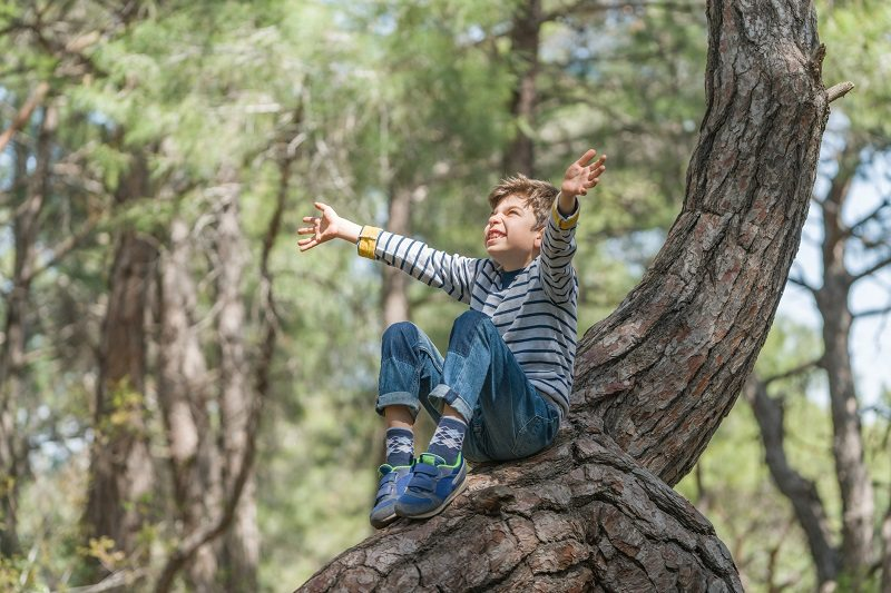 boy sitting tree climbing