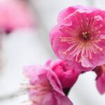 Get Your Ornamental Trees Ready for Spring