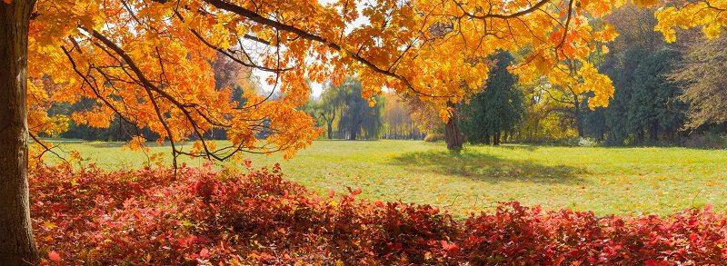 red oak autumn