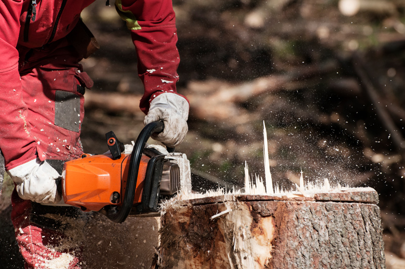 Chain Saw Being Used on Tree Stump