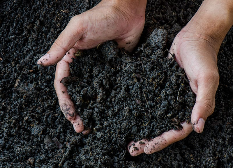Hands lifting rich dark soil
