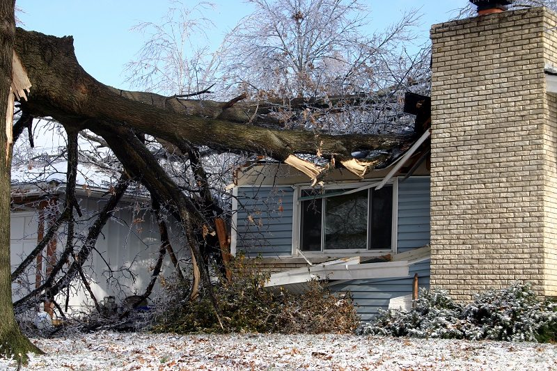 The Benefits of Homeowner's Insurance for Tree Clean Up