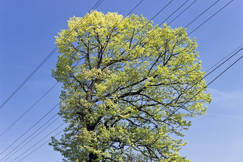 tree electrical wire