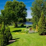 The Best Air- Purifying Trees and Plants
