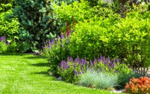 Maintained shrubs and garden