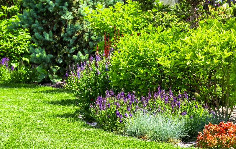 How to Choose and Maintain Shrubs in New Jersey