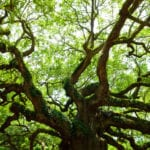 Historical Trees of New Jersey: Tracing Old Roots