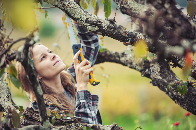 A Homeowners Guide to Tree Trimming Basics