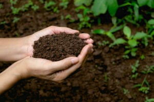 Hands filled with Healthy Rich Soil