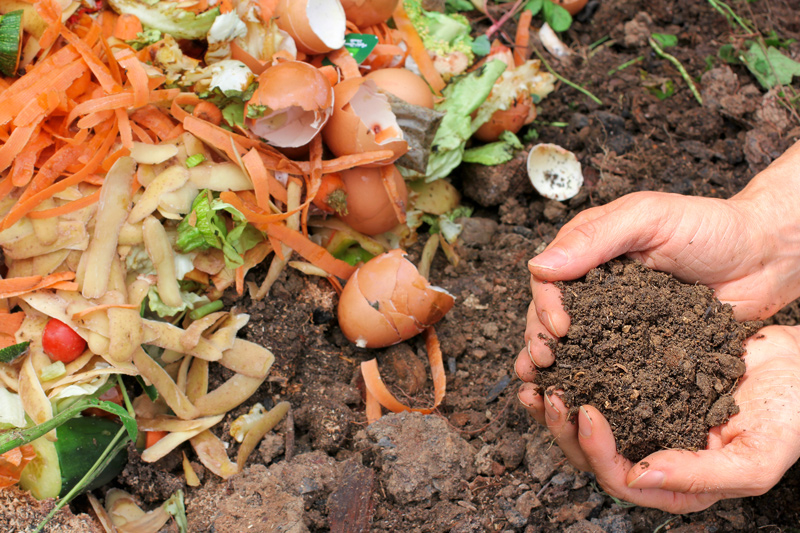 Adding Food Scraps to Make Compost to Maintain Healthy Soil