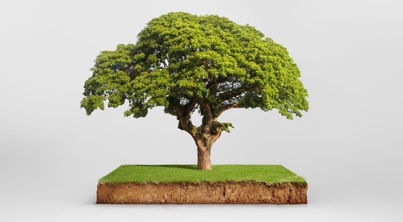 Tree Shown with a Slice of Earth