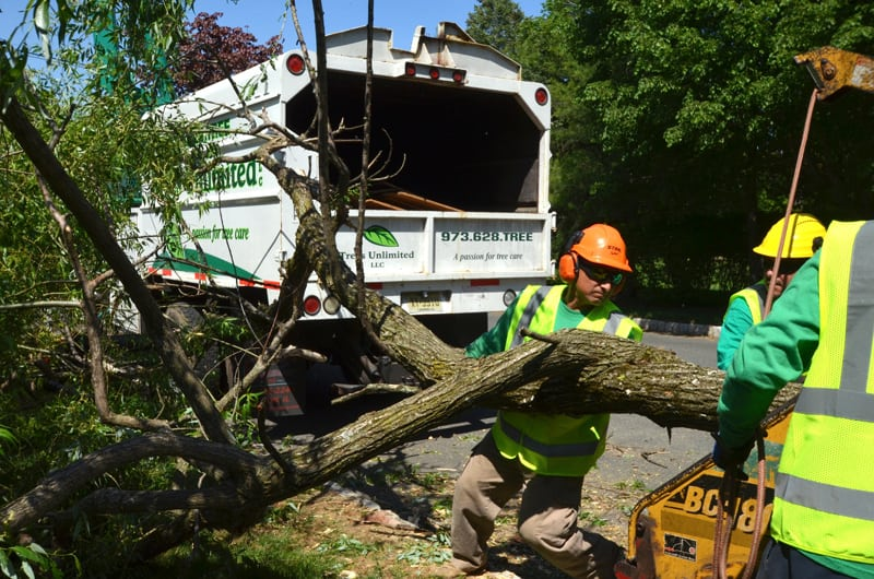 Tree Specialists Mulching a Large Tree Branch