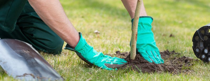 Installing a tree line - planting a tree