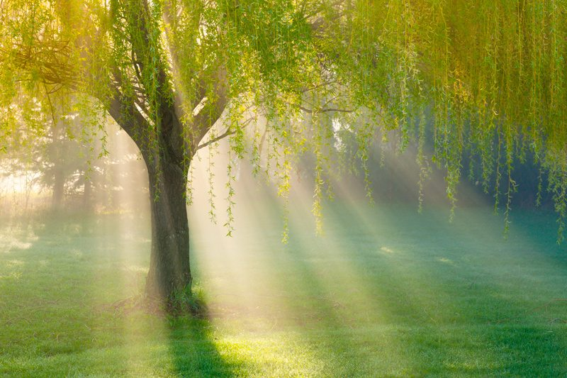 Sun rays shining through a beautiful tree