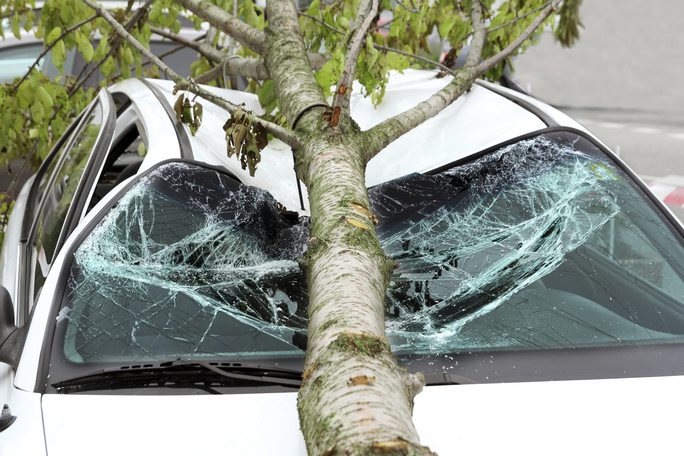 A Car with a Fallen Tree On It