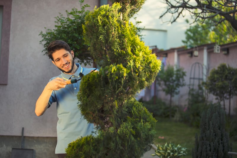 Man Trimming a Topiary