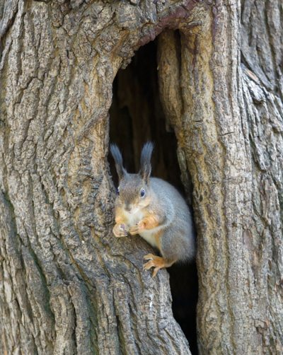 Rodent In Tree
