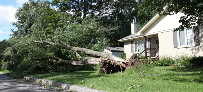 Prepare Your Trees for Storm Season