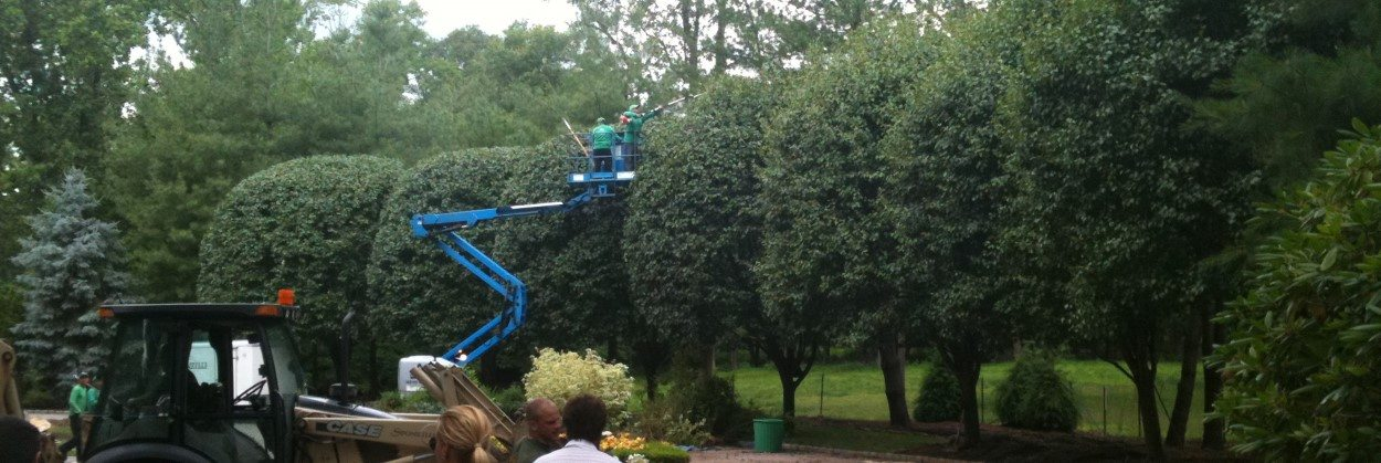 Pruning Tall Trees in NJ
