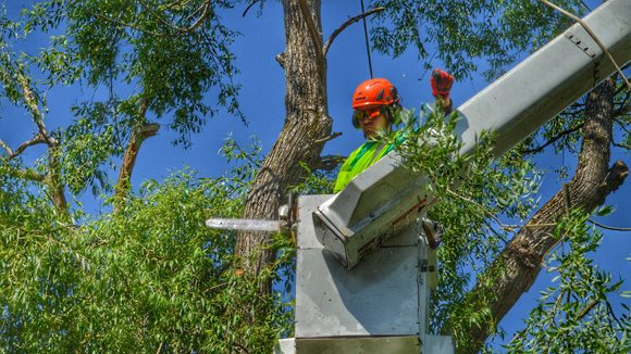 Removing Upper Branches for Tree Removal