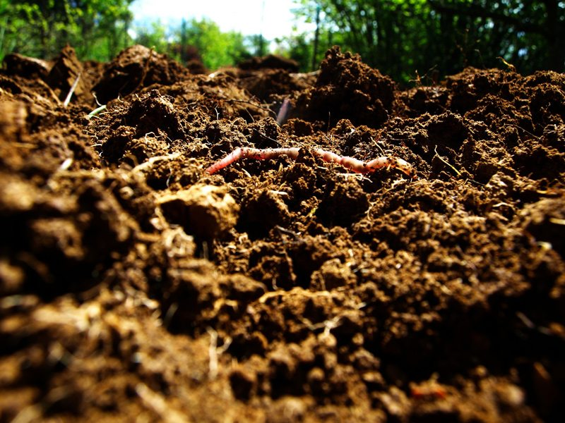 Tilled Soil with Earthworm