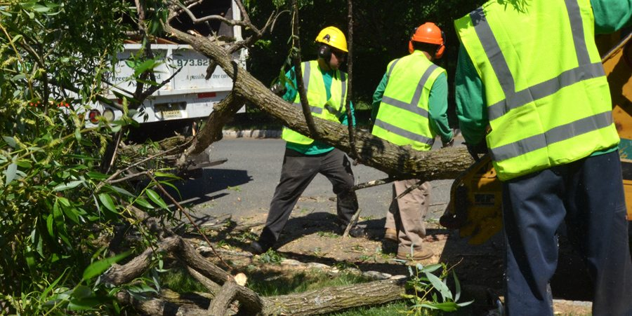 Tree Specialists at Work