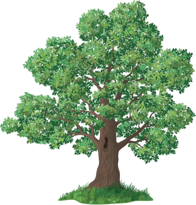 Tree with Structurally Sound Branches