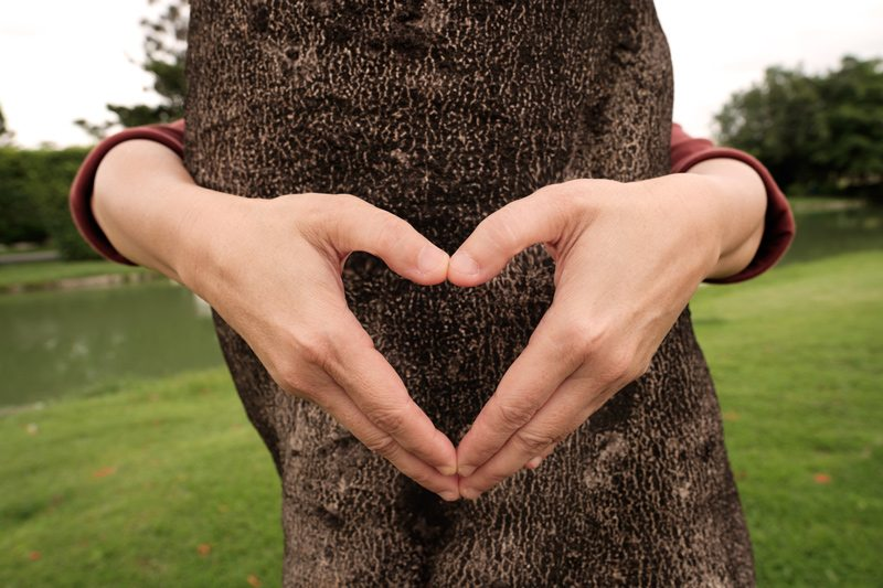Hands in Heart Shape Around Tree - We Love Trees
