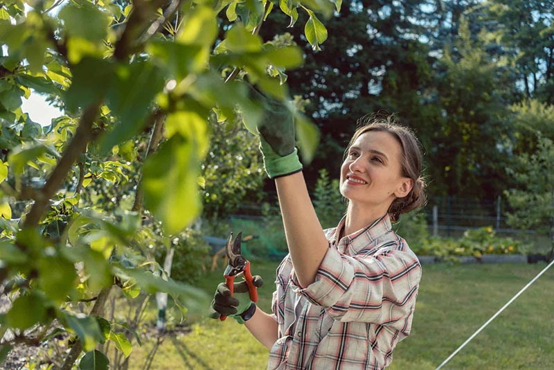 woman-Pruning-Trees-in-Flannel-Shirt